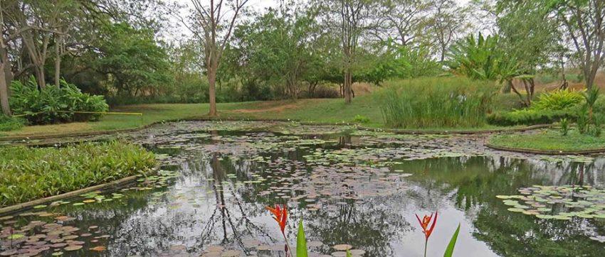 Seminario recorrido y taller sobre el jard n bot nico de for Talleres jardin botanico